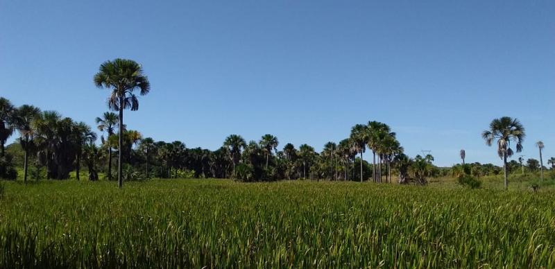 Semana do Meio Ambiente foi realizada com sucesso em Eliseu Martins