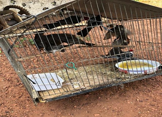 Fiscais da Secretaria de Meio Ambiente de Picos apreendem animais silvestres presos em cativeiro