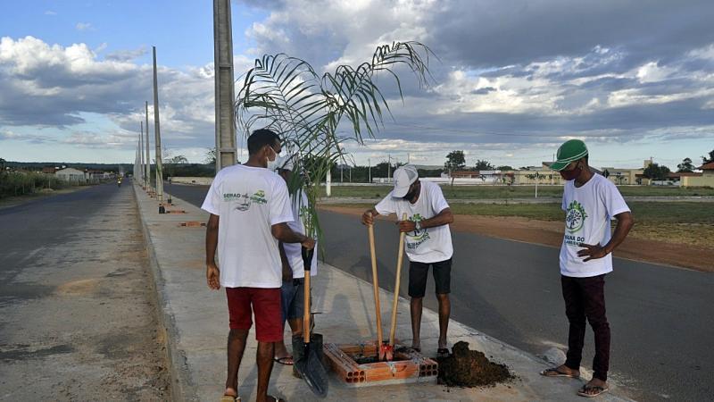 Piripiri vai ganhar uma nova avenida arborizada com palmeiras imperiais e iluminação solar