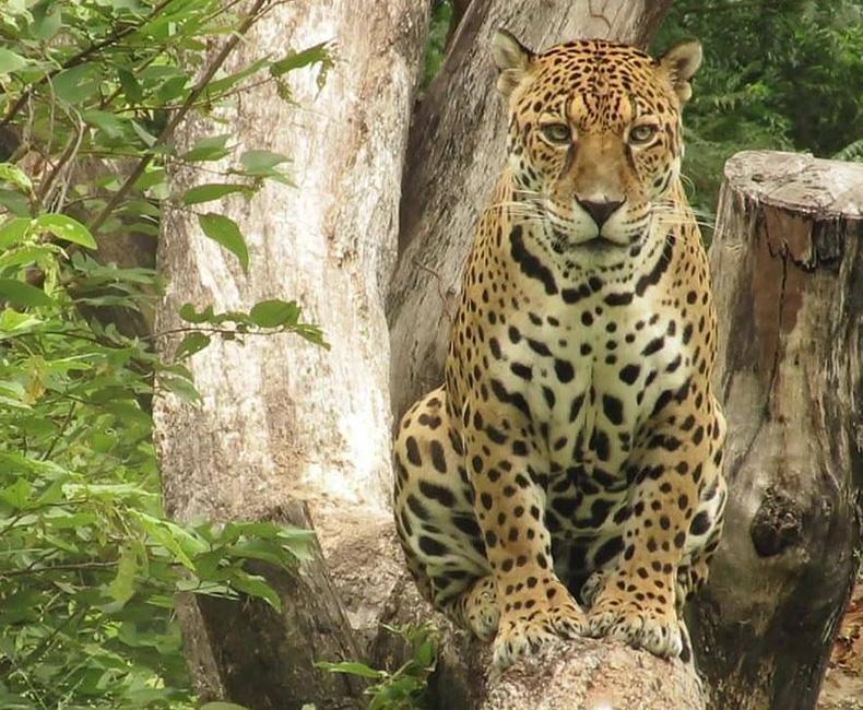 MP recomenda suspensão de transferência de animais do Zoobotânico