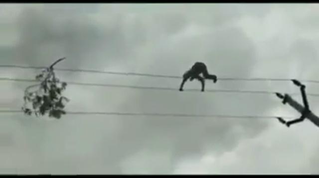 Homem se equilibra em fios de alta tensão para retirar um galho; vídeo