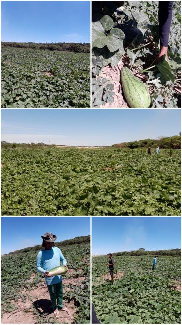 Vazante ganha destaque na zona rural de União e famílias comemora a chegada dos frutos.