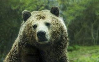 'Perturbador': Pelo telefone, pai ouve filha sendo morta por urso
