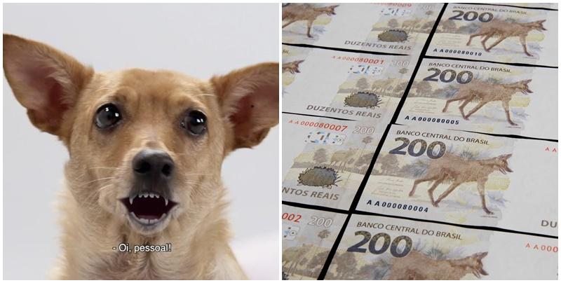 Vira-lata caramelo aparece no comercial da nota de R$ 200 do Banco Central; Veja o vídeo
