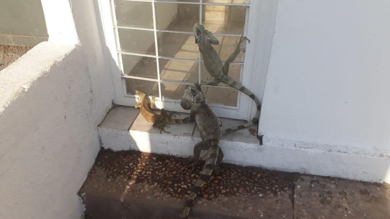 Incêndio destrói mata e animais silvestres buscam 'abrigo' em porta de motel em Teresina