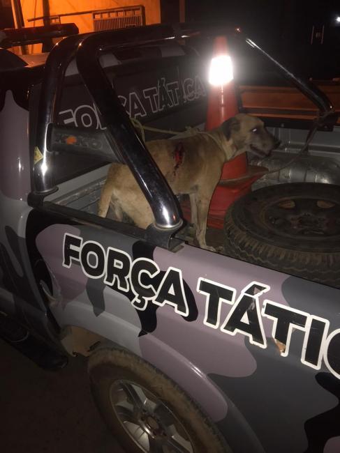 Força Tática prende homem por maus tratos aos animais