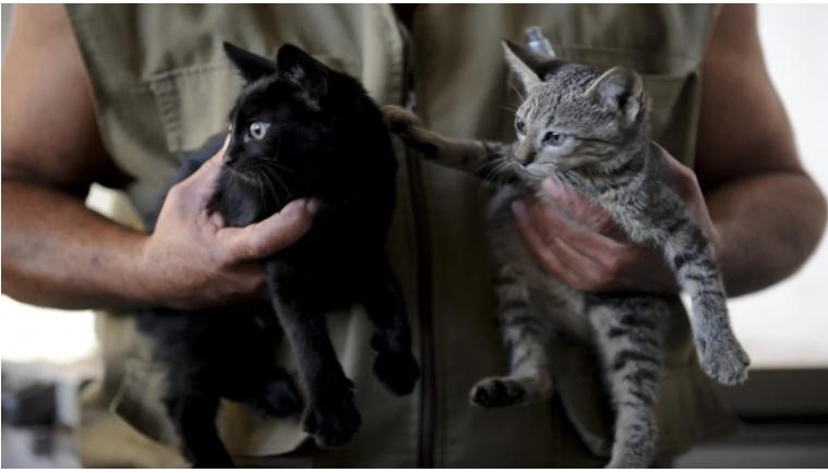 Gata com Covid: Brasil registra 1º caso de infecção em animais