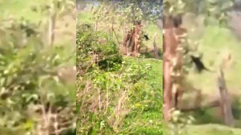 Homem é pego transando com égua e apanha da dona do bicho; veja o vídeo!