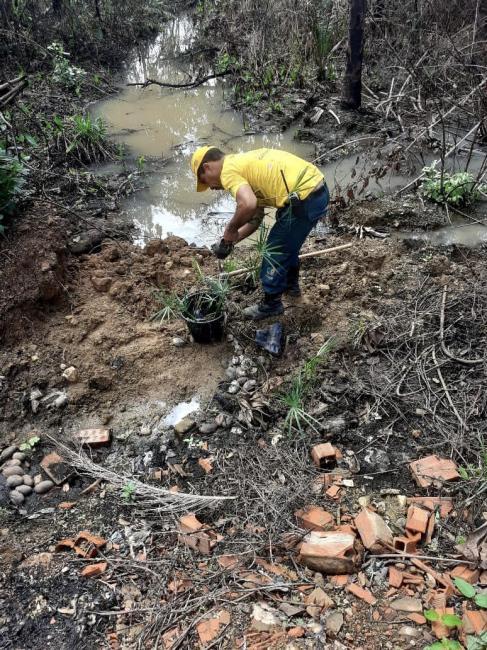Brigada Municipal realiza ações de reflorestamento em áreas afetadas com incêndios.