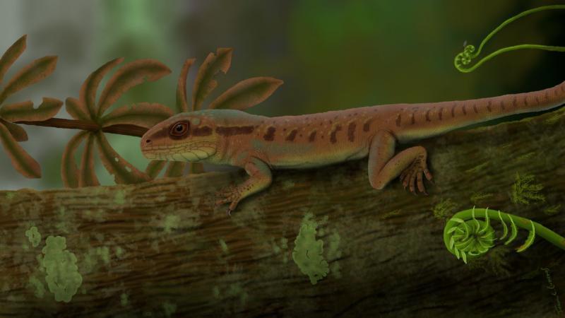 Pesquisa inédita da UFPI descobre nova espécie de réptil da Era Paleozoica em Nazária-PI